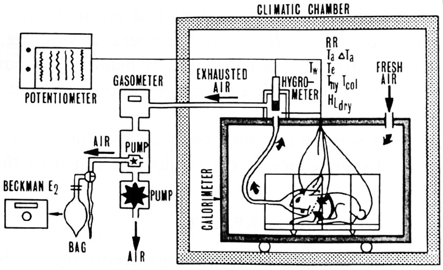 Diagram Schematic Diagram Of The Calorimetry Apparatus Used To